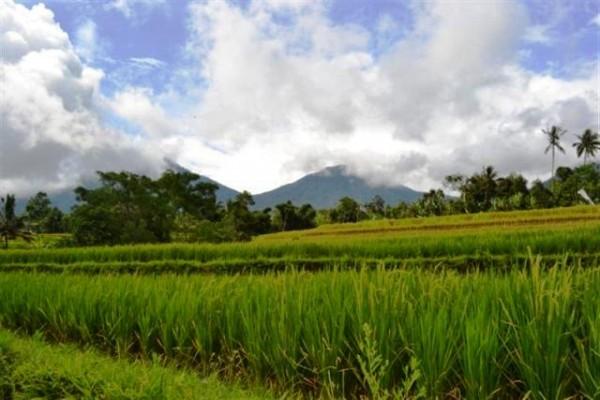 Dijual Tanah di Jatiluwih Tabanan, Bali – TJTB004