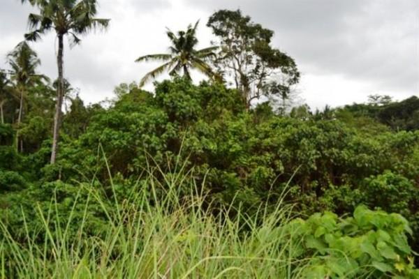 Jual Tanah Lingkungan Villa di Ubud, Bali – TJUB009