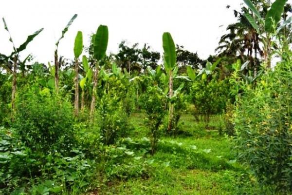 Tanah Dijual di Pilan Ubud view ke arah tebing – TJUB013