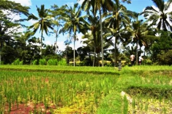 Tanah Ideal Untuk Villa Dijual di Ubud Bali – TJUB027