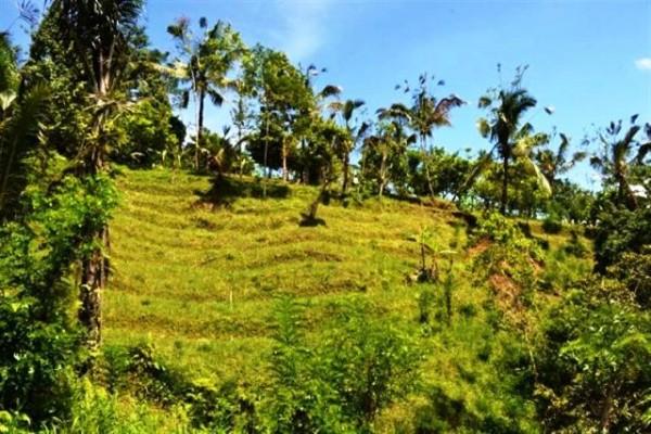 Tanah Spectakuler 750 Are Dijual Di Ubud, Bali – TJUB045