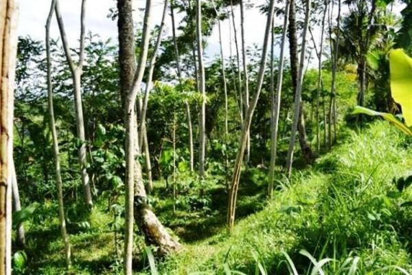 Tanah 1 Ha View Cantik Dijual di Ubud, Bali – TJUB047