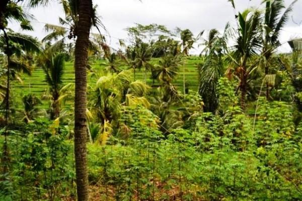 Tanah Cantik 35 Are Dijual di Ubud, Bali – TJUB055