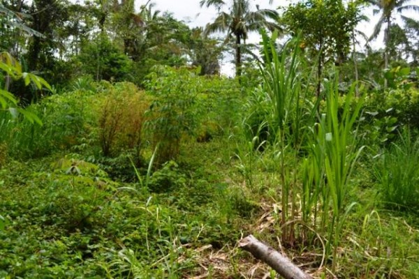45 Are Tanah Dijual Di Ubud Bali – TJUB058