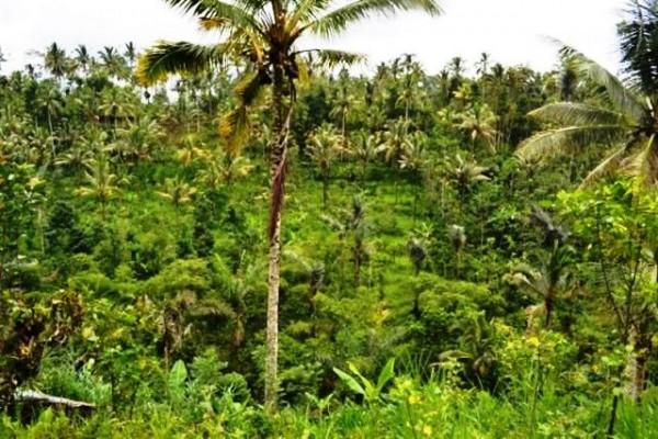 Tanah 228 Are Dijual di Tegalalang Ubud, Bali – TJUB060