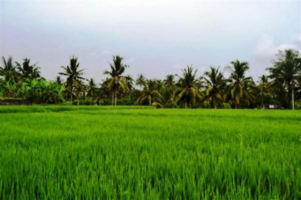 Tanah Dijual 30 Are di Ubud, Bali – TJUB063