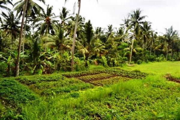Dijual Tanah 60 Are di Pejeng Ubud, Bali – TJUB064