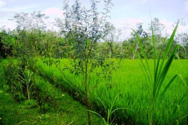 Tanah 2 hektar dijual di Payangan Ubud, Bali – TJUB073