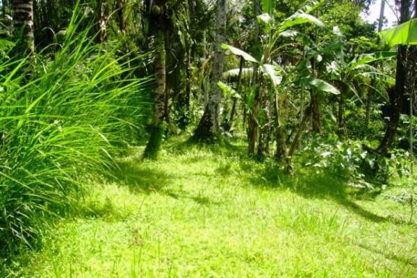 Tanah dijual 15 are di Tegalalang Ubud, Bali – TJUB077