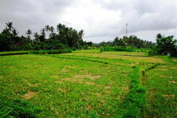 Dijual Tanah 26 Are Di Pejeng Ubud, Bali – TJUB084