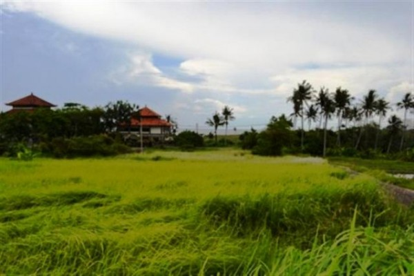 Jual Tanah di Canggu Bali dekat dengan Pantai Cemagi Canggu 25,4 are view sawah -TJCG005