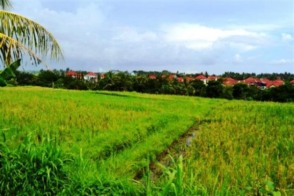 Jual tanah di Canggu Bali view sawah dipinggir Jalan raya Canggu – TJCG010