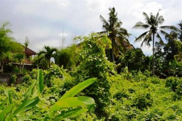 Jual Tanah di Canggu Bali cocok untuk villa 7,5 are – TJCG012