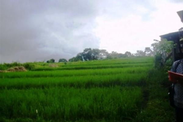 Jual Tanah di Canggu Bali 18 are dipinggir jalan Canggu  – TJCG018