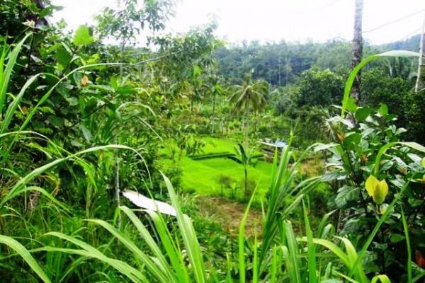 Tanah dijual di Ubud Payangan, 2 Hektar view tebing tepi sungai – TJUB073