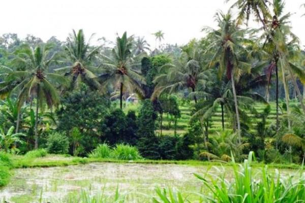 Tanah dijual di Ubud dekat Central Ubud, view sawah dan sungai, cocok untuk villa – TJUB084
