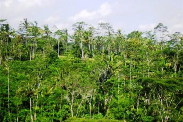 Tanah dijual di Ubud view sawah cocok Untuk villa  ( TJUB097B )