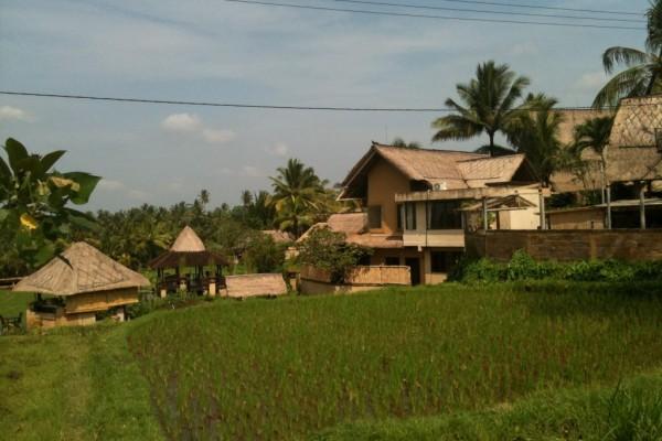 Tanah – tanah dijual di Tanah Ubud Bali 7