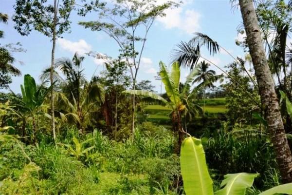 Dijual tanah di Tegalalang, Ubud – T1002