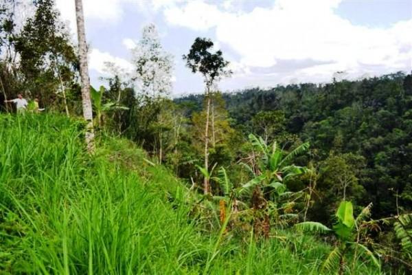 Tanah dijual di Payangan Ubud – T1001