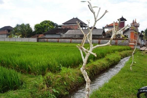 Disewakan tanah di Mas Ubud, Bali cocok untuk villa – T1026