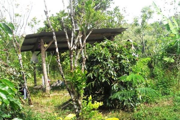 Jual tanah Super murah dekat jembatan Plaga Badung, Bali T1028