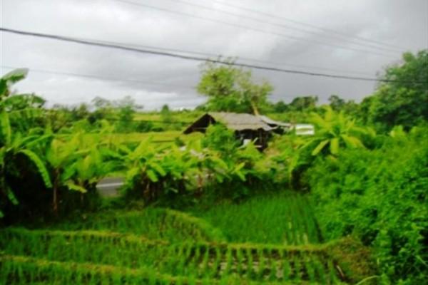 Tanah di pinggir jalan raya Canggu, 18 are @ 185 jt – TJCG018
