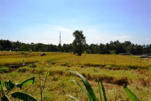 Tanah 17 are di Canggu, Kuta. View sawah dekat sungai – TJCG034