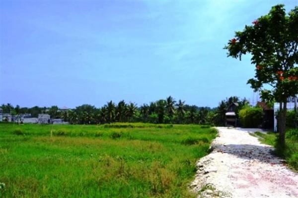 Tanah Dijual di Pantai Pererenan, Canggu. Pinggir jalan view sawah – TJCG037