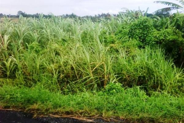 Dijual tanah di Canggu pinggir jalan view cantik – TJCG042