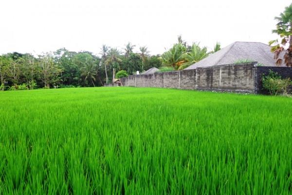 Dijual Tanah lingkungan villa di Canggu – TJCG051