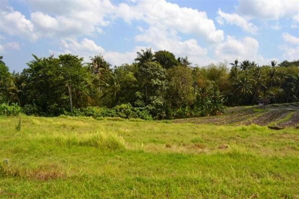 Dijual tanah di Canggu view sawah di Lingkungan Villa – TJCG052
