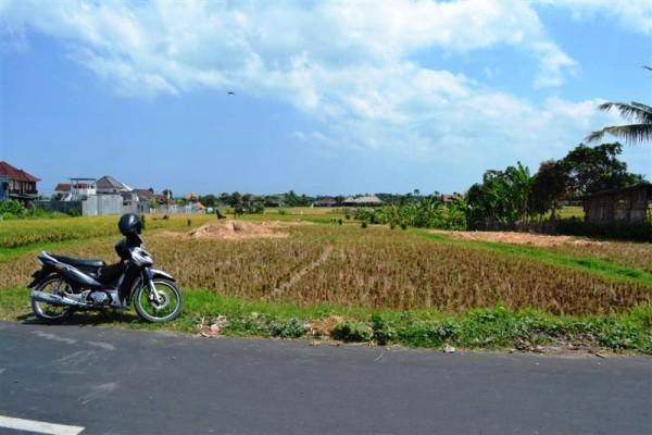 Dijual tanah di Canggu view sawah di Pinggir Jalan – TJCG053