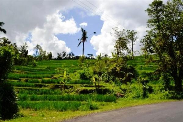 Dijual tanah view bagus lokasi Jatiluwih Tabanan – TJTB009