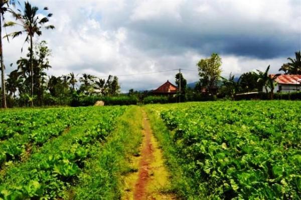 Dijual tanah view tebing /gunung lokasi Jatiluwih – TJTB012