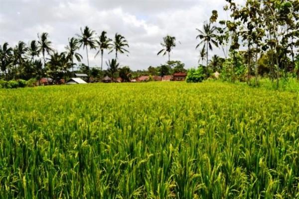 ubud land for sale 2300 m2 – TJUB023