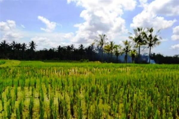 Dijual tanah di ubud ( 27,2 are ) – TJUB027