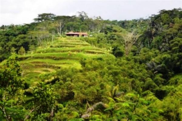 Tanah dijual di Ubud pinngir jalan view cantik – TJUB033