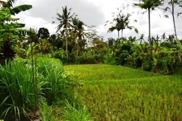 Dijual tanah di Ubud Pejeng dengan view sawah – TJUB075