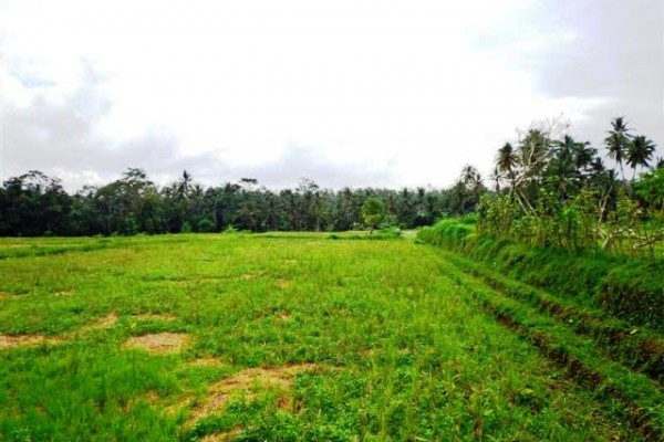 Jual tanah di Pejeng dekat Central Ubud – TJUB085