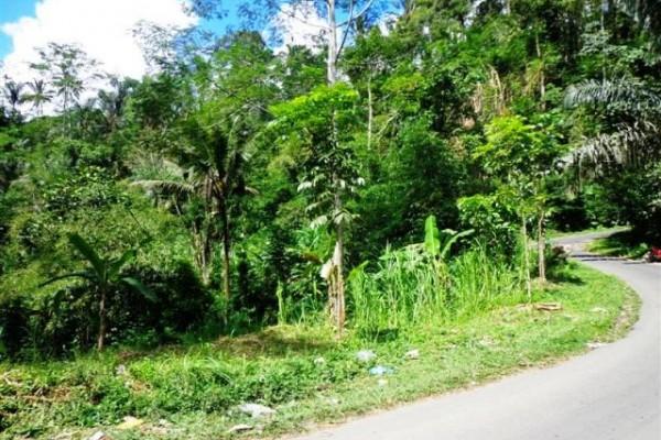 Jual tanah di Ubud dengan view sawah dan ada sumber Mata air – TJUB093