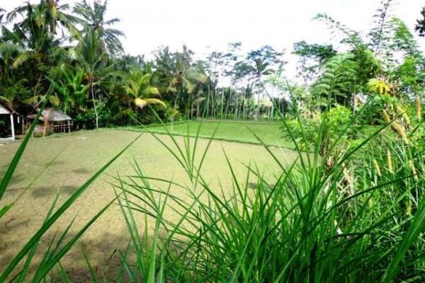 Jual tanah di Ubud dengan view Cantik – TJUB094