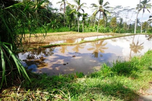 Tanah dijual di Ubud dengan view sawah Tebing – TJUB099