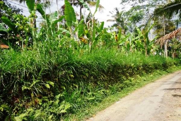 Dijual tanah di Ubud Payangan Cocok untuk villa – TJUB100