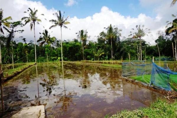 Dijual tanah di Ubud Payangan – TJUB101