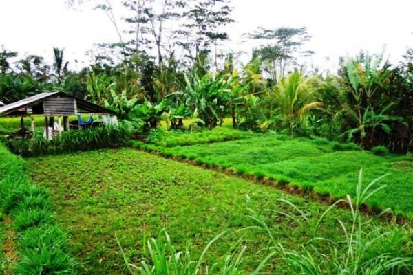 Jual tanah di Ubud dengan view Hutan dan Sungai – TJUB103