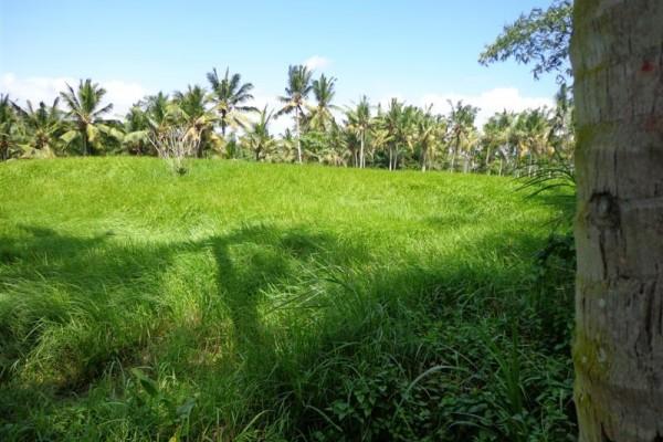 Dijual tanah di Ubud view sungai dan sawah – TJUB113