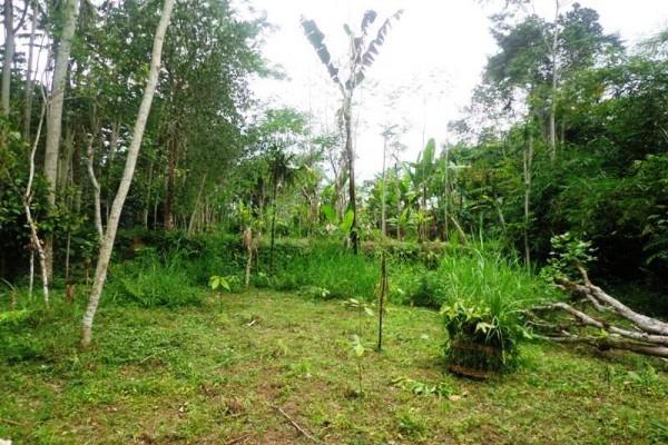 Dijual tanah di Ubud di pinggir jalan – TJUB117