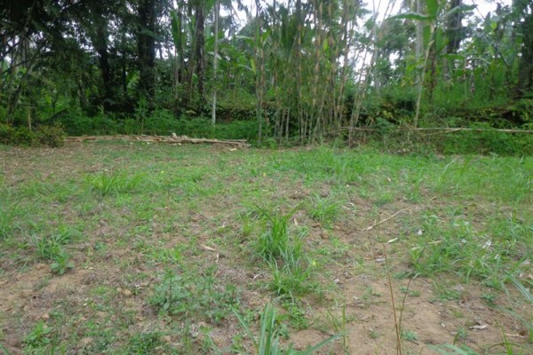 Tanah dijual di Ubud Tegalalang cocok untuk villa – TJUB118