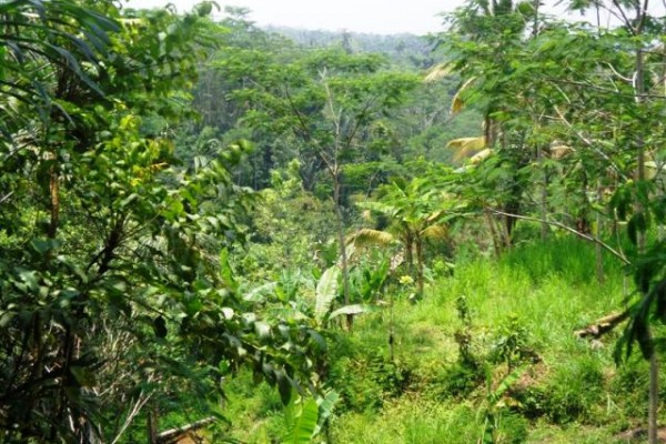 Jual tanah di Ubud Tegalalang dekat Hotel Bagus Jati – TJUB125